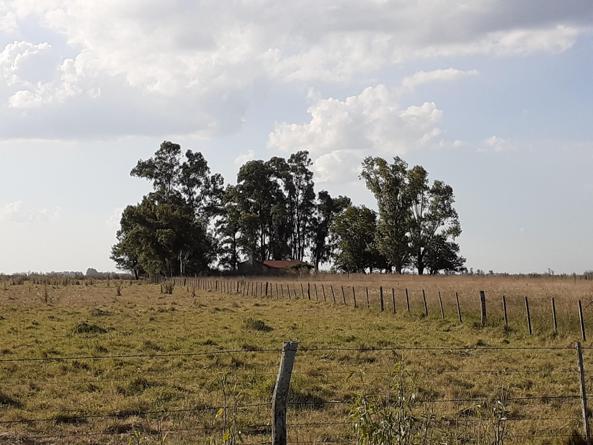 Campo Ganadero En Roque Perez Muy Bien Ubicado