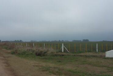 Feed Lot en Campo de 19 has con instalacion de engorde en Roque Perez